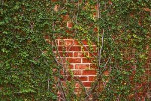 Ibn Ezra: Walls and Growth (Vayechi)